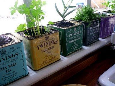 Windowsill Garden in Tea Tins